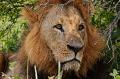 Safari Kenya Nairobi.png